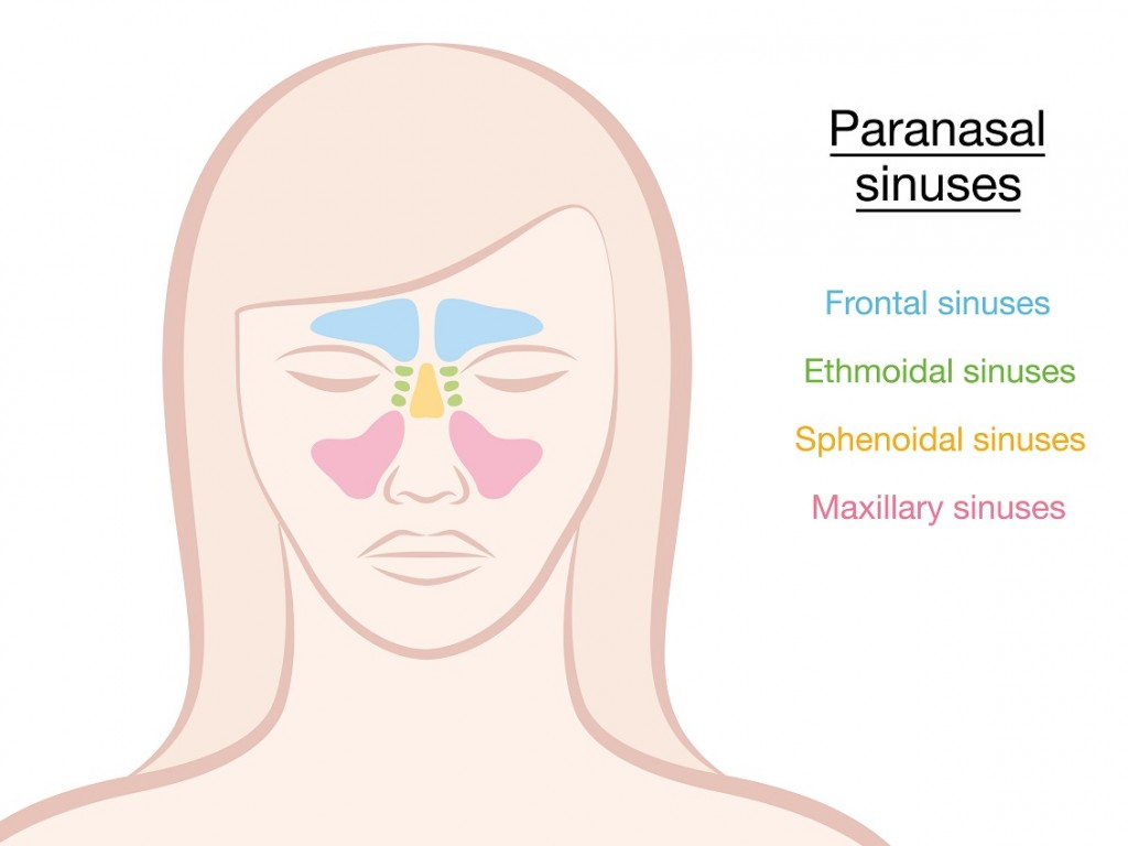 Why Does My Whole Head Hurt When My Sinuses Are Congested?